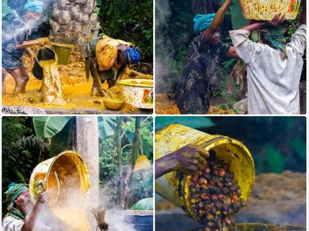PHOTOS: See How Palm Oil Is Being Produced In Some Parts Of Nigeria