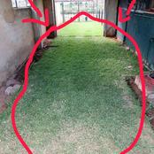 Limpopo man shows off his garage with green grass and Mzansi starts talking,