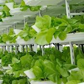 Five practices used in sustainable horticulture and agriculture