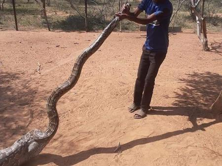 Farmer Left People Shook After Catching A Snake In The Morning And Saying This