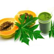 Boil Neem tree leaves and pawpaw leaves, drink to cure these health problems