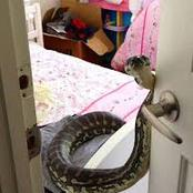 Places in Kenya Where Snakes Get Into Rooms During the hot Season