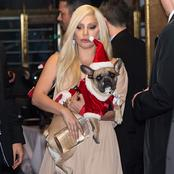 Lady Gaga Offers To Pay 190 Million Naira To Whoever Helps Locate Her Dogs