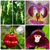 Nature Wonders : Here Are 26 Plants That Look Like Parts Of Human Body, Animals And Birds.