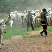 Few Days After Northern Traders Ended Strike, Oyo Farmers Alleged Fresh Attack By Herdmens