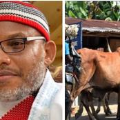 Today's News: Kanu Warned To Stay Away From Benue, Ondo Farmers Lament As Herdsmen Invade Farmlands