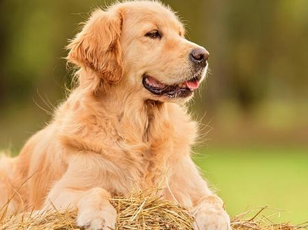 10 Beautiful Dog breeds you should own.
