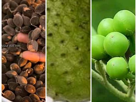 See The English Names Of 'Aluguintugui', 'Yoryi', 'Kantose' And Other Local Fruits