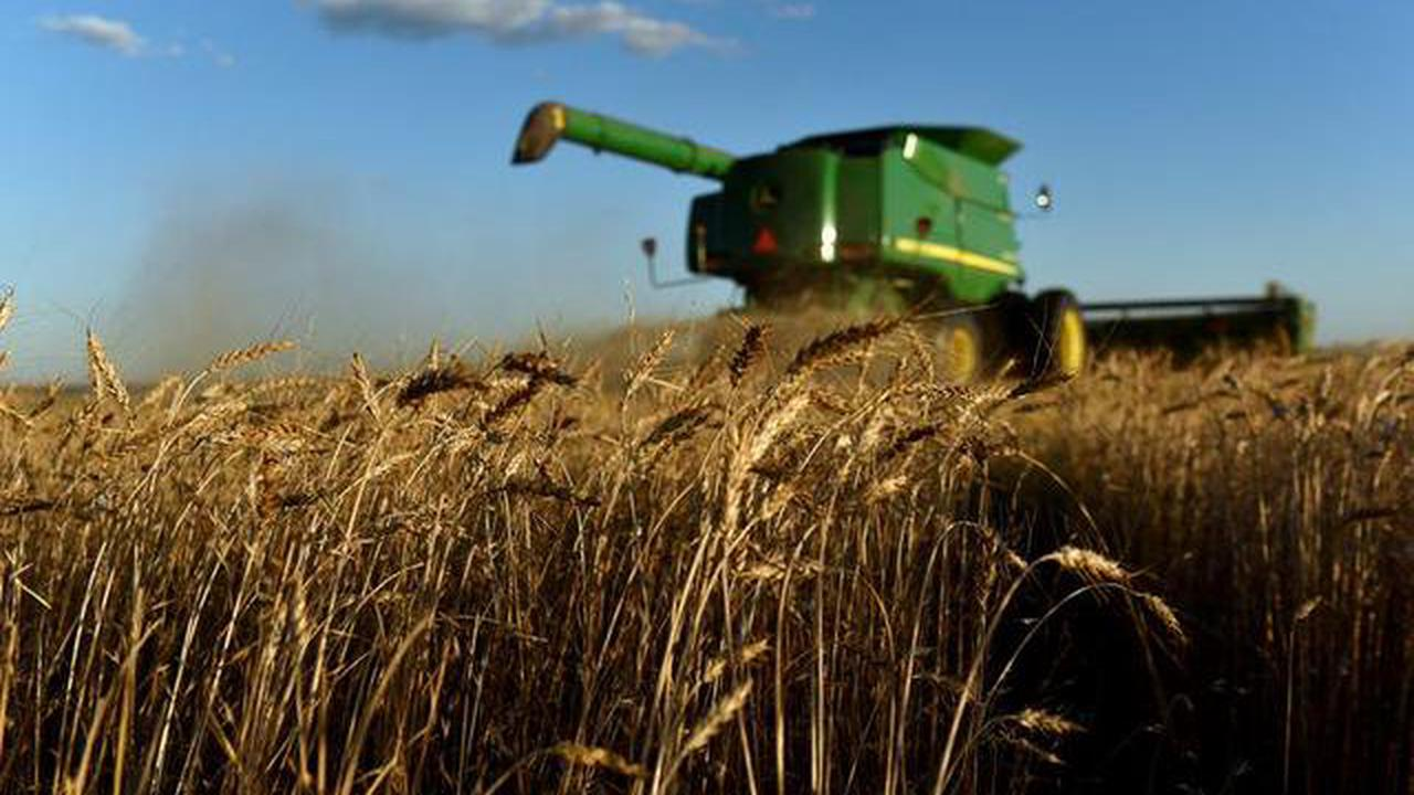 GRAINS-Corn jumps 1%, on course for biggest weekly loss in nearly 2 years