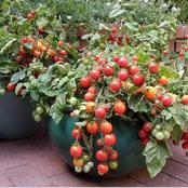 You Don't Need To Own A farm So As To Plant Crops! Look These Tips Here And Make Some Cash Everyday
