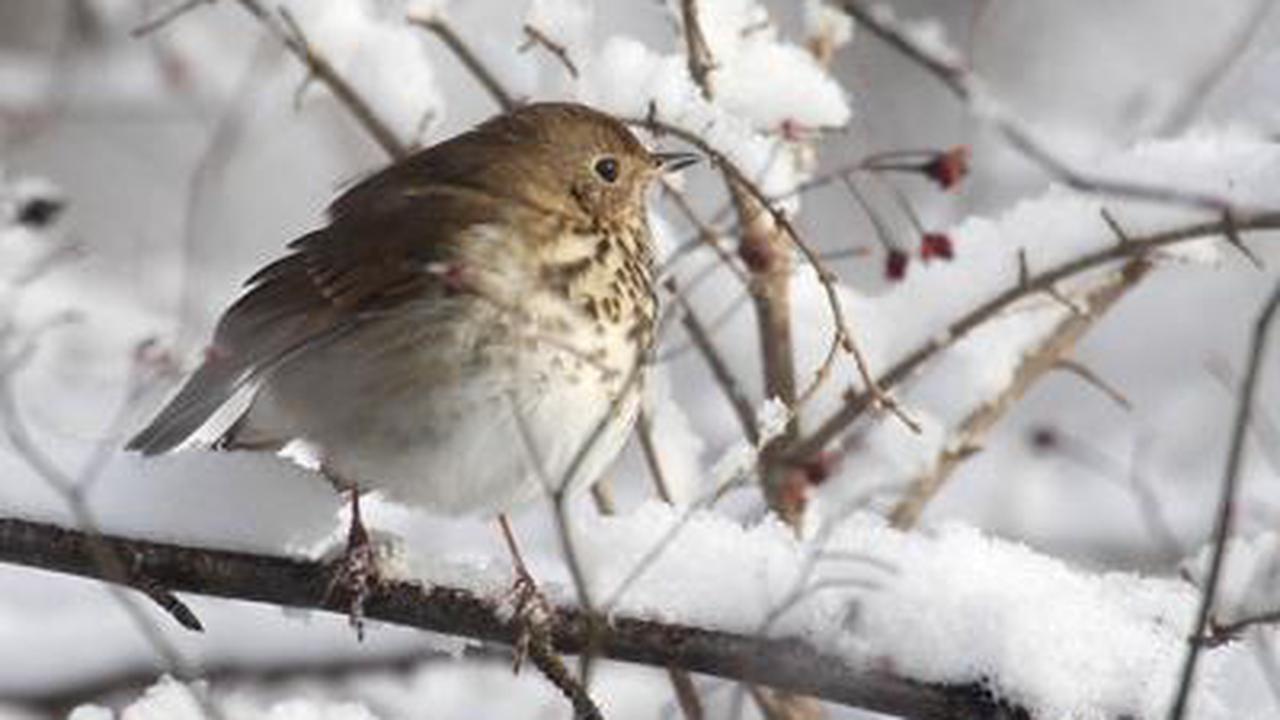 Participate in the Savannah Area Christmas Bird Count through Jan. 5