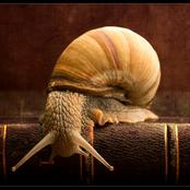 Check Out These Useful Health Tips On Snails!