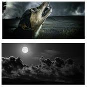 Four reasons dogs bark during the night and why it concerns every humans beings.