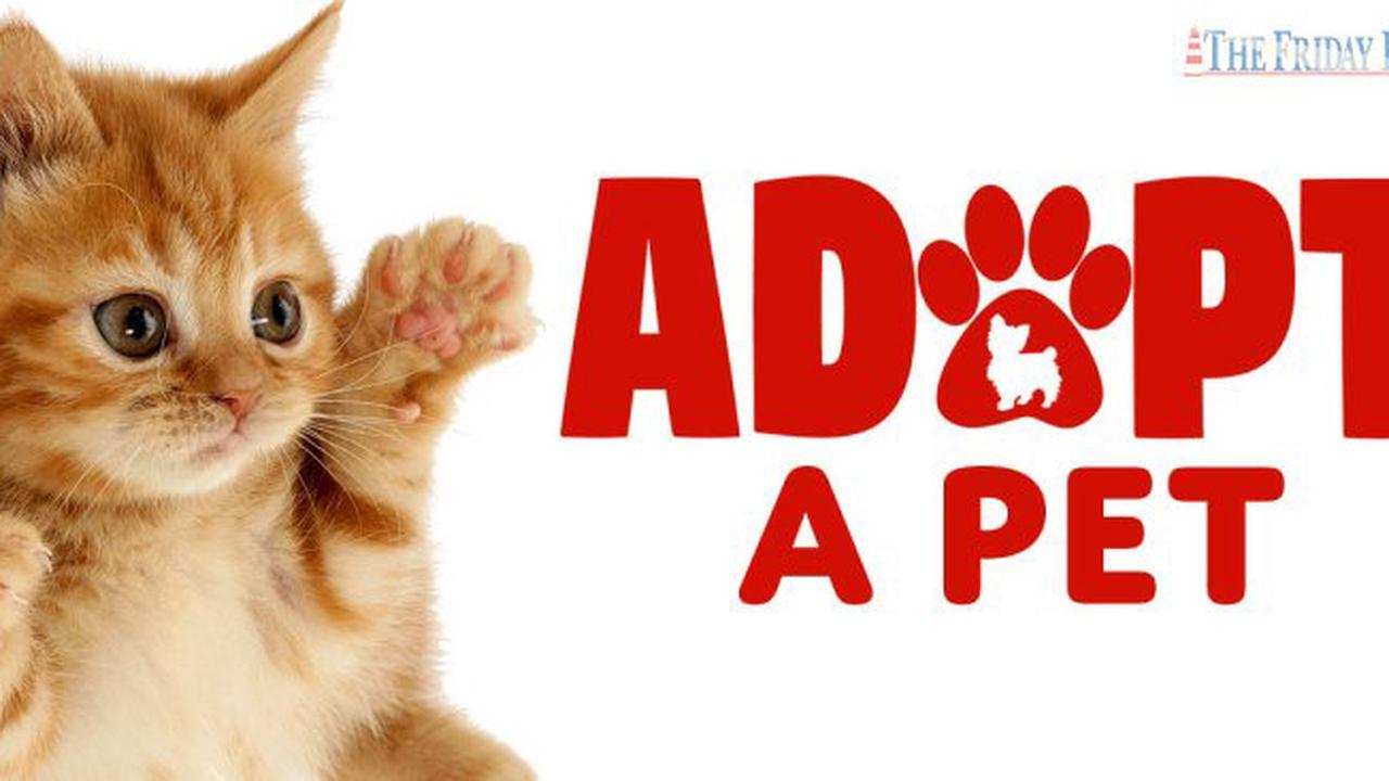 Adopt-a-Pet: Flint Max