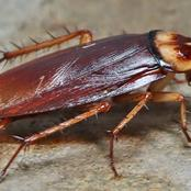 If You Have Cockroaches In Your Home, Use These Remedies To Get Rid of Them
