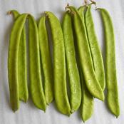 Improve on your health, see the Health benefits of jack Bean.