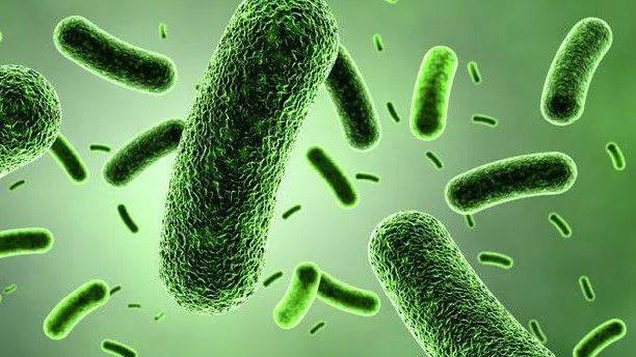 Raumstation-Experiment: Mutation von Probiotika durch Strahlung