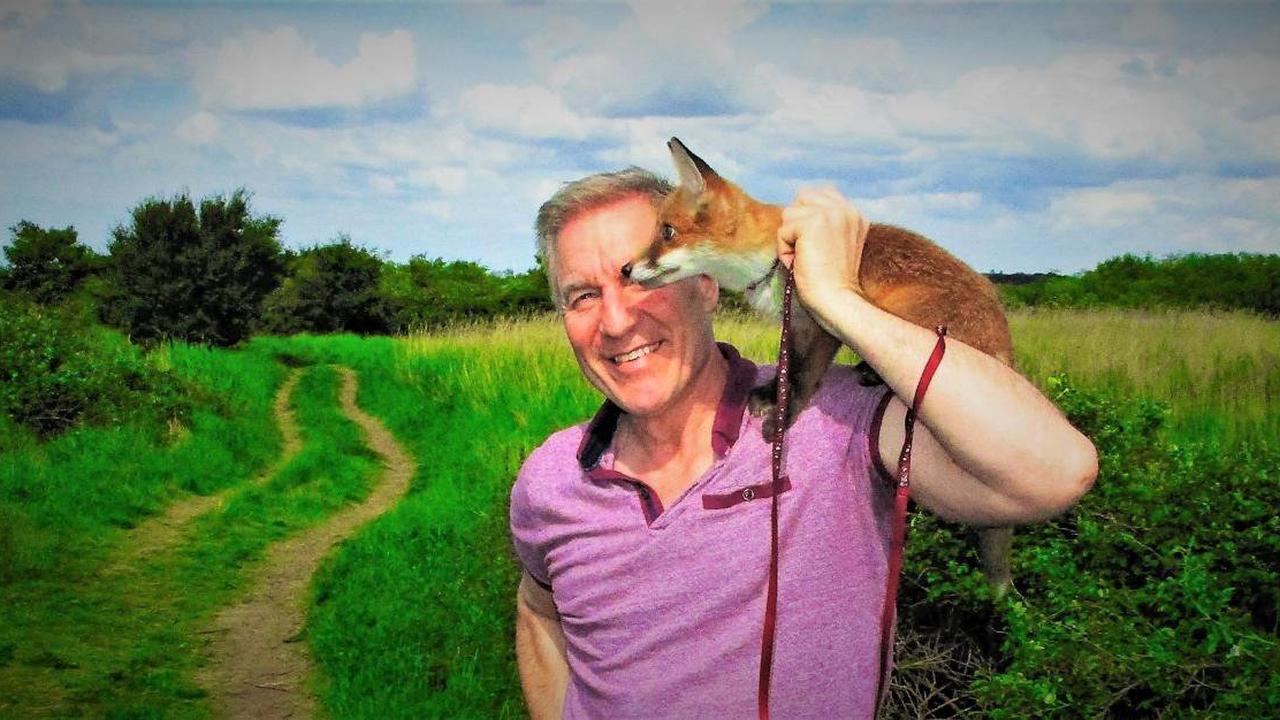 Man nurses fox cub back to health - with regular cups of Yorkshire Tea
