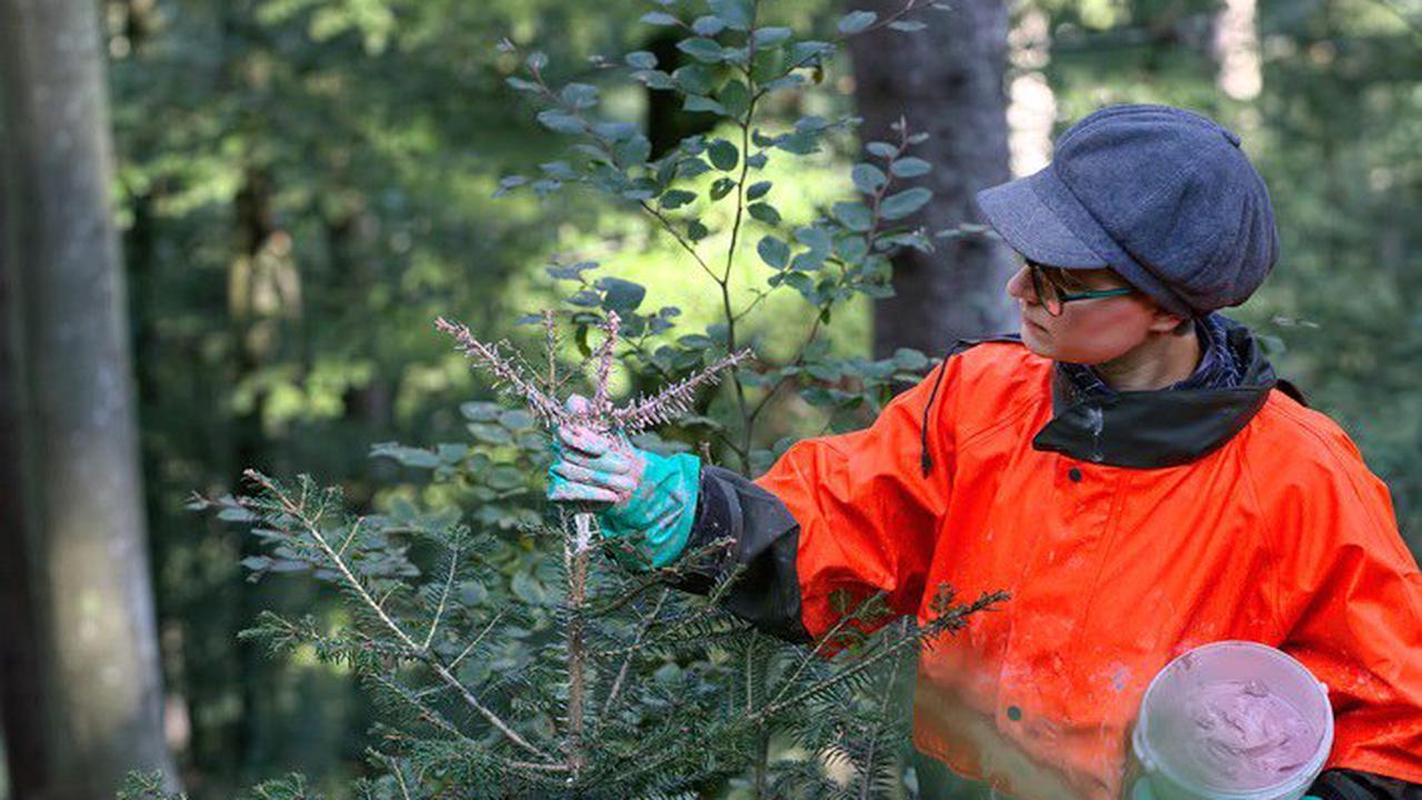 Arbeiten für Artenschutz und Artenvielfalt: Bergwaldprojekt-Freiwillige aktiv im Freiburger Stadtwald