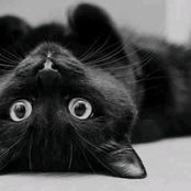 الشيطان كان نصف قطة.. تعرف على معركة الفاتيكان مع القطط وأسبابها الغريبة