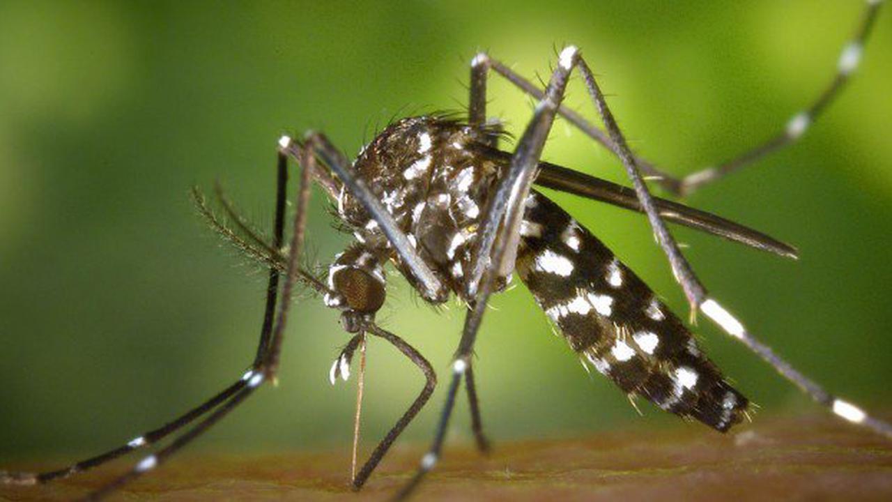 Val-de-Marne. Un cas de dengue identifié à Alfortville, la commune lance une opération