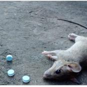 Stop Wasting Money On Rat Poison; Use This Simple Method To Kill Rats In Your Home