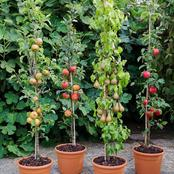 All You Need To Know About Planting The Best Dwarf Cherry Species In Your Garden