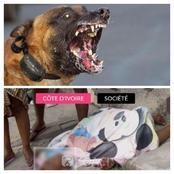 Scène d'horreur à Marcory : un chien de race attaque et devore grièvement une jeune dame