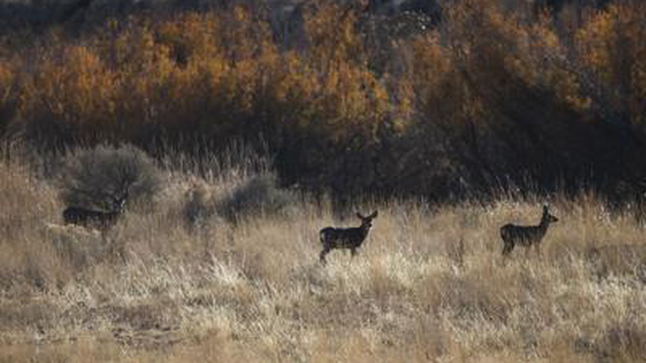 Letter: Keep Yakima River Canyon wild and pristine