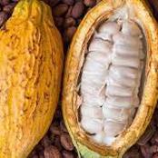 Blocage de la commercialisation du cacao : 3 syndicats menacent d'entrer en grève