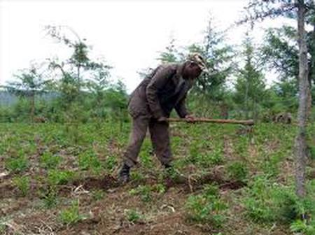 Farmers farming at the Elgon forest in trouble