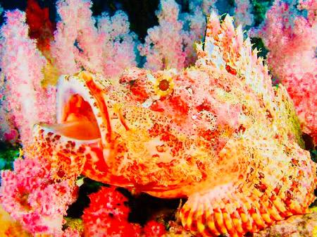 Some Fishes Look So Alien, See Reason Why They Are Special.