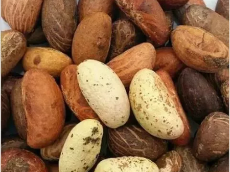 Facts: Why You Should Eat Bitter Kola Every day (PHOTOS)