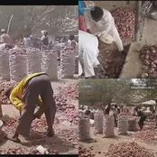 See Video Of Northerners Lamenting After N35,000 Onions Now Sells For Cheaper Price, See The Price
