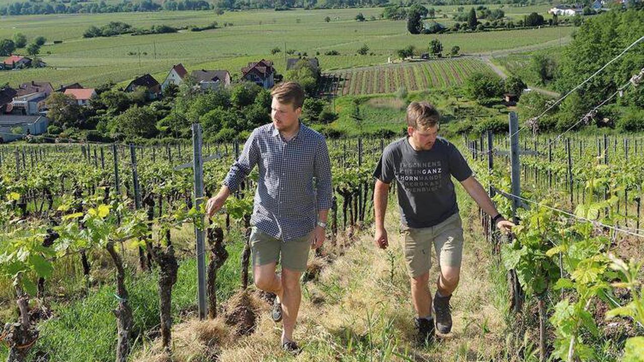 Weingut Ökonomierat Rebholz: Geschmack an neuen Wegen finden