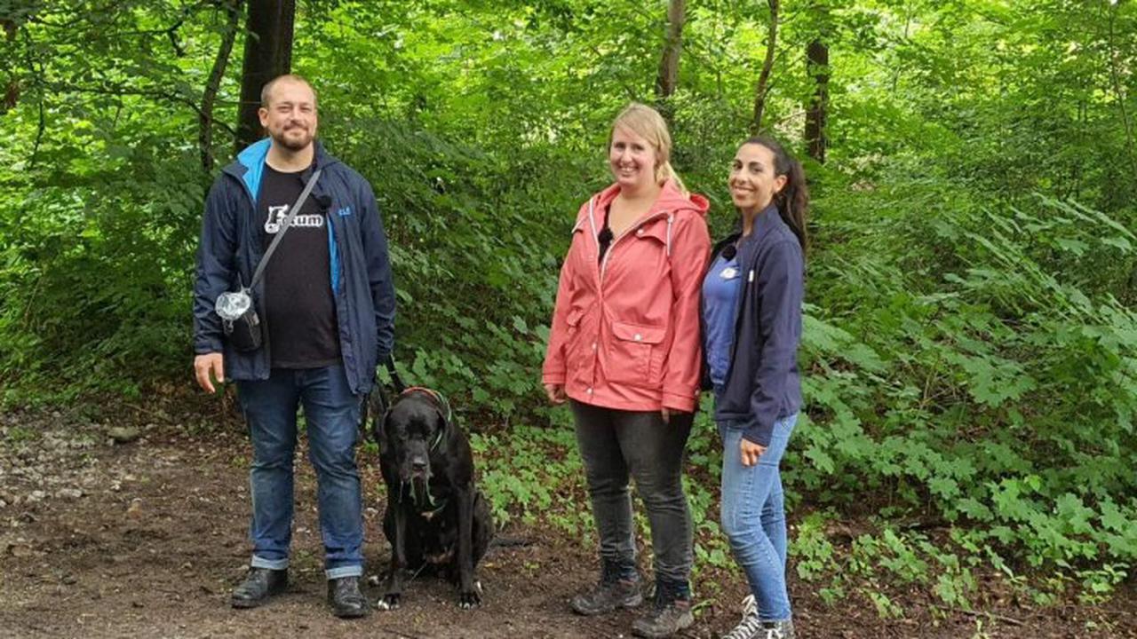 """""""Der Hundeprofi - Rütters Team"""" bei Vox im Livestream und TV: Episode 2 aus Staffel 2 des Hundetrainings"""