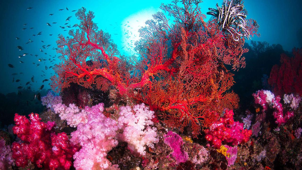 """Corals use sound to """"talk"""" to each other, new research says"""