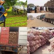 Our Perishables Are Spoiling -Northern Farmers Cry Out At Huge Loss After Food Embargo To South