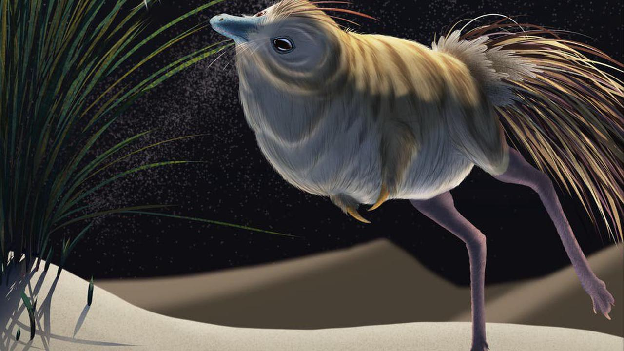 Tiny dinosaur which lived in the desert had 'extraordinary' night vision and owl-like hearing