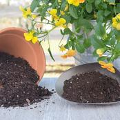 Without Any Soil, You Can Grow The Best Plants In Your Locality. Here is how