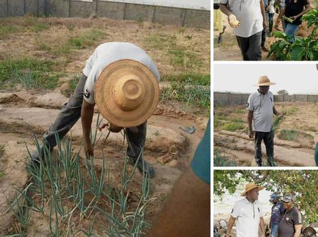 Former Speaker, Yakubu Dogara was sighted working in his farm [Photos]