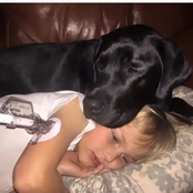 Dog is Called a Hero after Jumping on Mom in the Middle of the Night