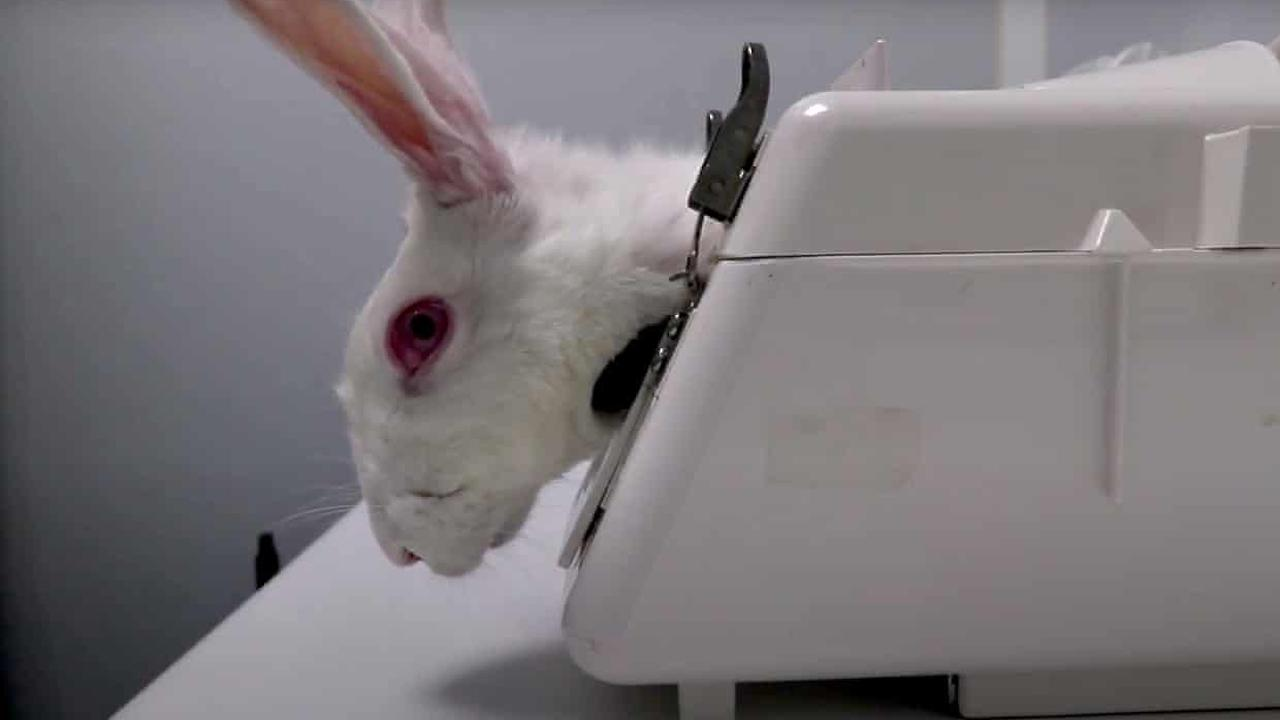 Undercover footage shows 'gratuitous cruelty' at Spanish animal testing facility