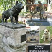 Photos Of 3 Brave Dogs Who Had Statues Built For Them For Remembrance, Check Out What They Did.