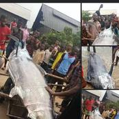 Check Out Photos Of A Giant Fish Recently Caught In A Fish Settlement In Rivers State