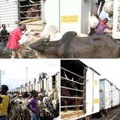 Train Loaded With Cows Arrives From Zamfara State To Agege For The First Time After 30 Years