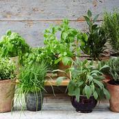 Garden Tips To Plant Fresh Herbs