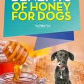 6 Uses and Health Benefits of Honey for Dogs