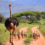 Great Places To Visit In Meru County