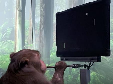 Monkey Plays Computer Game Using its Mind, Thanks to Elon Musk's Neuralink Chip